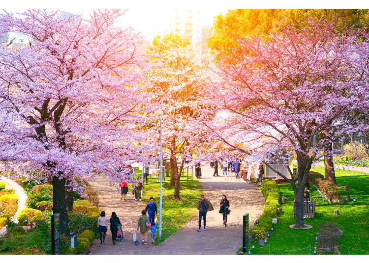 10 of Tokyo's Most Famous Cherry Blossom Viewing Spots