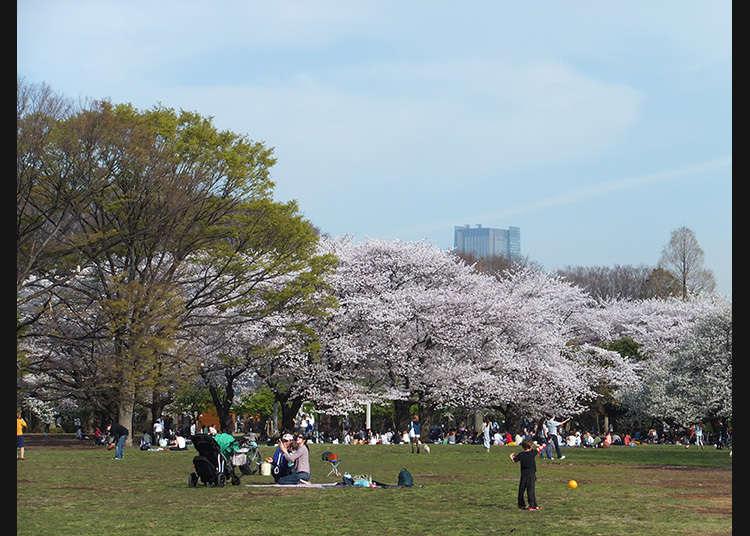 7 : 요요기 공원