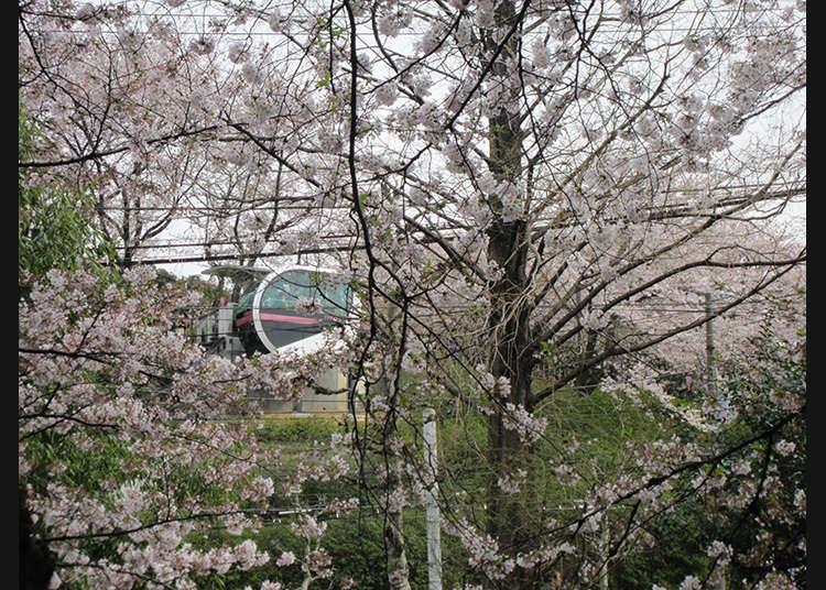 10 : 아스카야마 공원