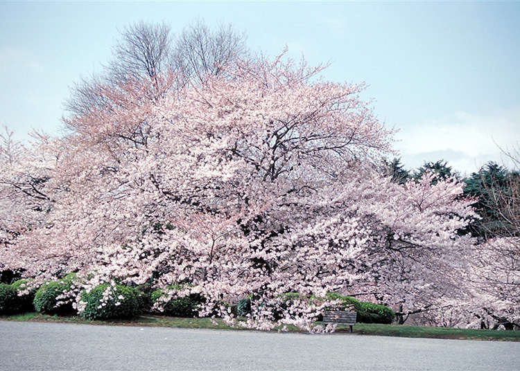 """1: """"Shinjuku Gyoen National Park"""""""