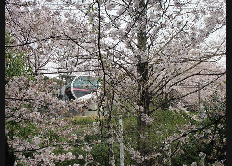 10. สวนอะซุคะยะมะ (Asukayama Park)