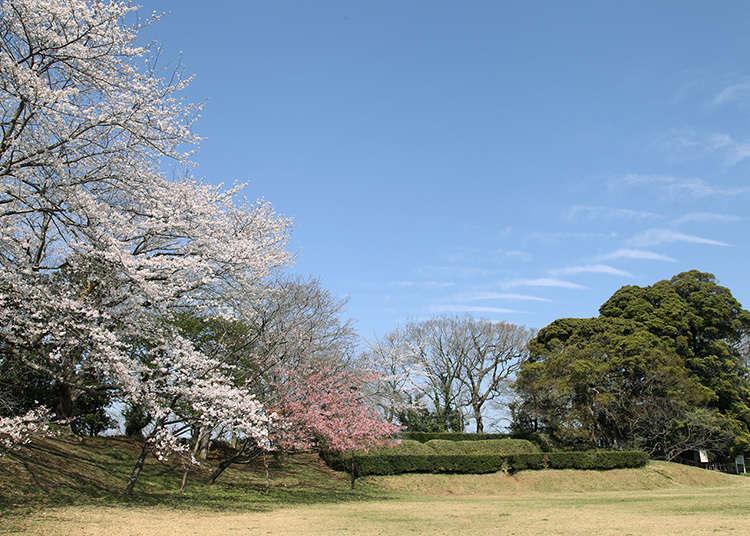 Antara 100 buah istana yang menjadi pilihan untuk melihat sakura