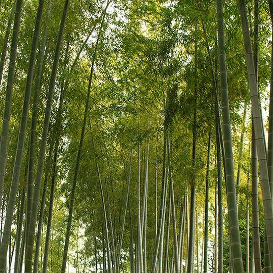 日本のわびさびを知る5つの庭園