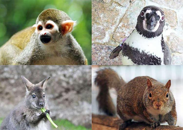 【西葛西】永遠免門票的動物園。