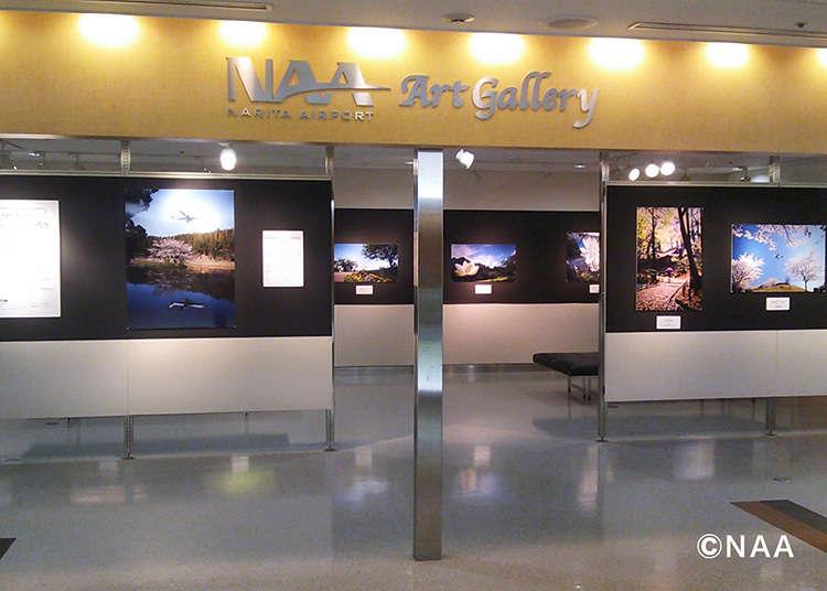 在「NAA畫廊」中鑑賞藝術作品
