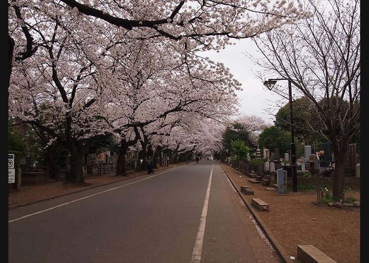 谷中霊園を歩き、日本の墓を知る