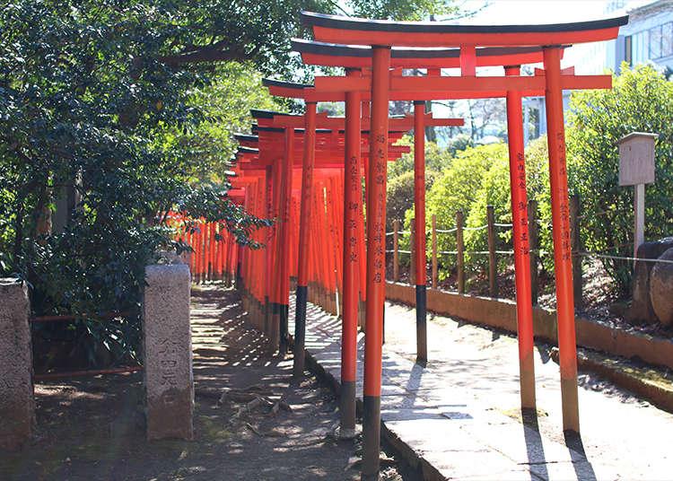 在根津神社穿过乙女稻荷的鸟居!