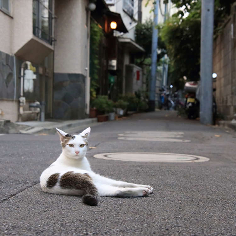 Take Pictures of Cats, Along with a Retro-Looking Townscape
