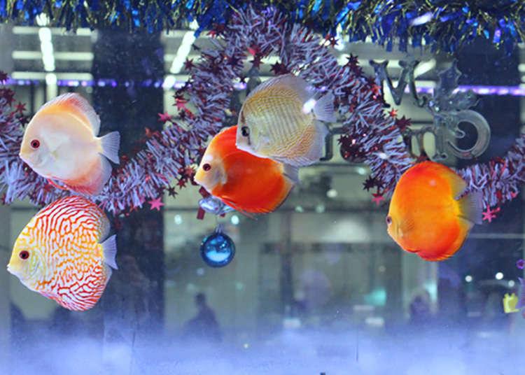东京都内最大规模的热带鱼店