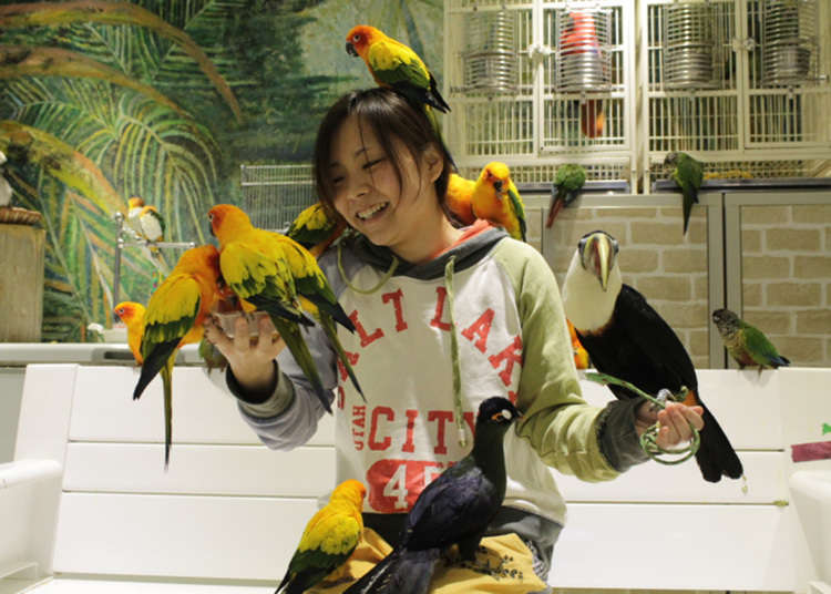 和親近人的小鳥們接觸!