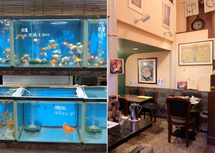 色彩繽紛的優游金魚