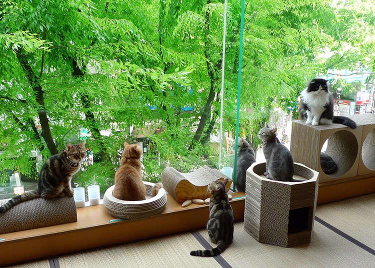 """治愈度120%的咖啡店""""HAPPY猫"""""""