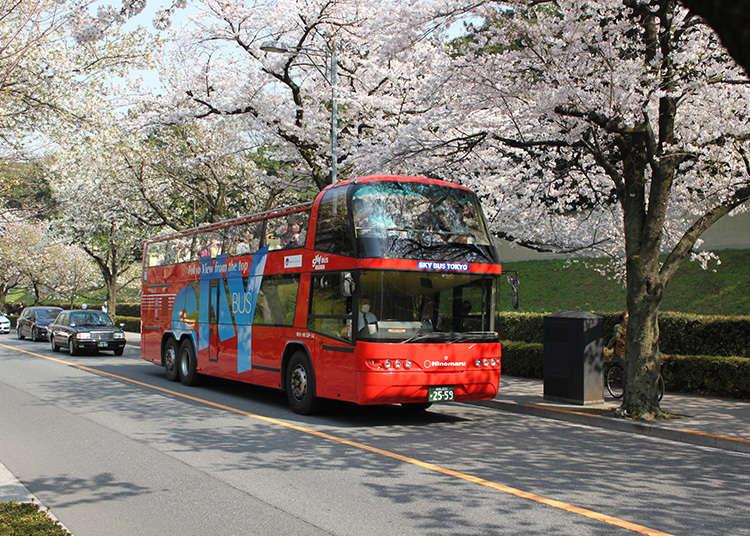 搭乘觀光巴士遊覽