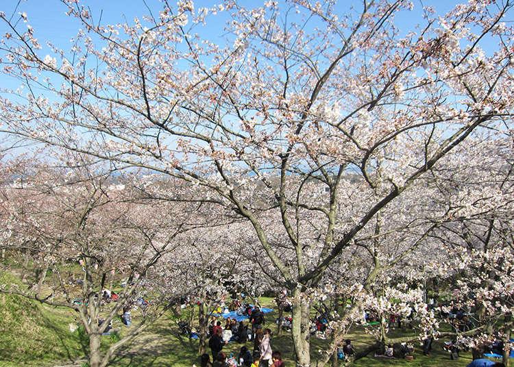 사적과 벚꽃과 요코스카의 전망을 즐길 수 있는 명소