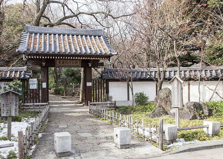 有四座瀑布的綠意盎然的日本庭園