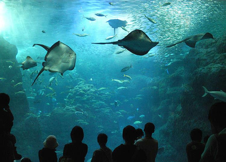 """""""新江之岛水族馆""""是治愈心灵的人气景点"""