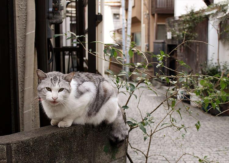 3時間で粋な日本に触れる「神楽坂」を回りつくそう!
