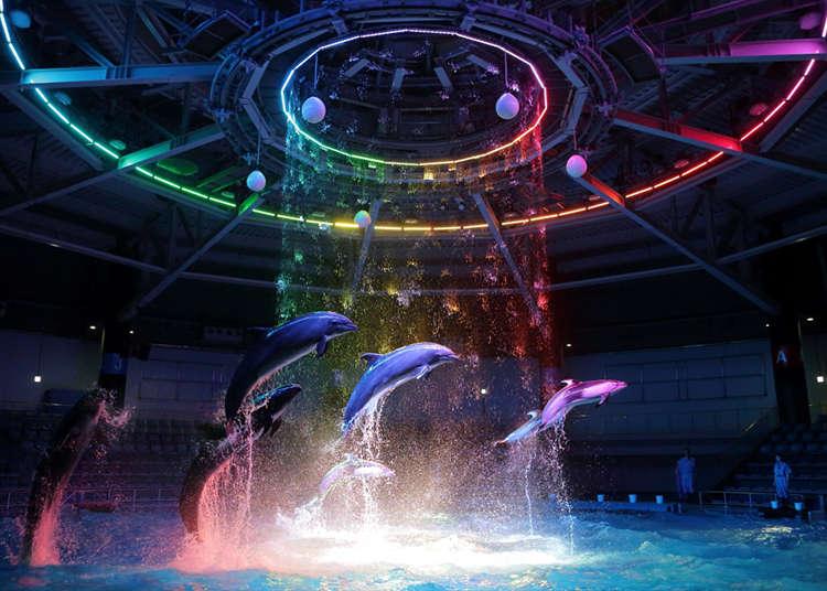 令人感动的海豚表演!