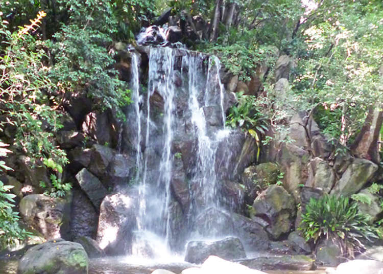 A waterfall at the park? A free secret oasis to heal your mind near the station.