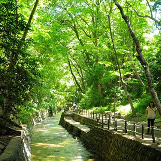 Relax at Todoroki Keikoku Ravine, a Paradise of Plants and Water