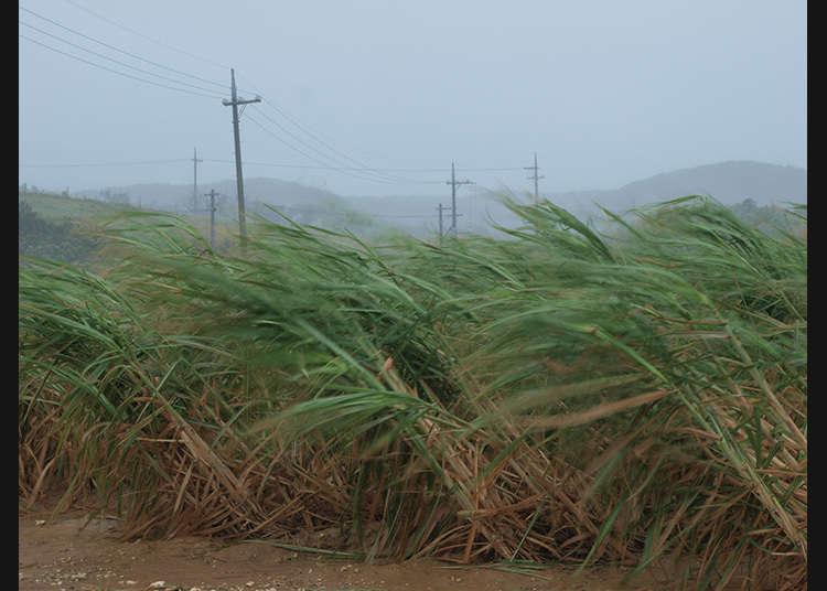 颱風來臨時的對策