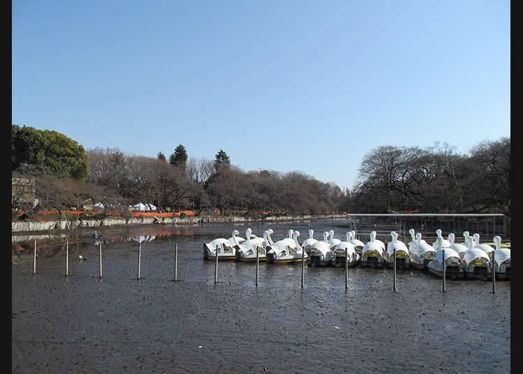 บริเวณรอบ ๆ เมืองมิทากะ (Mitaka-shi)
