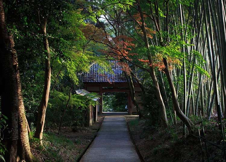 The history of the main religions in Japan and the view of Japanese people towards religion