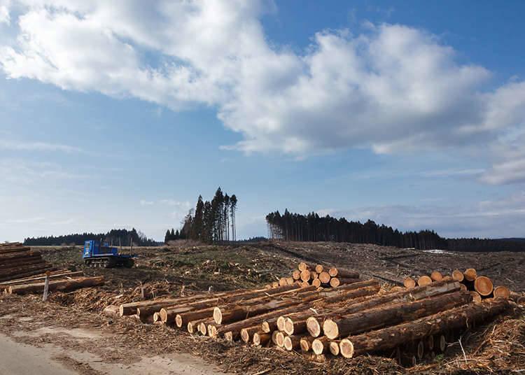 อุตสาหกรรมป่าไม้ที่เป็นที่นิยม
