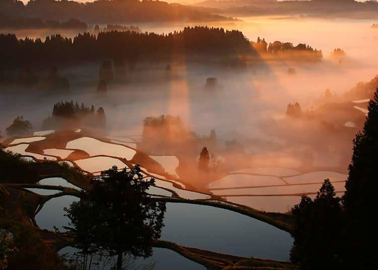 日本的原野風景