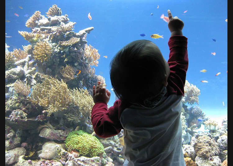 The reproduction of the sea as it exists in nature