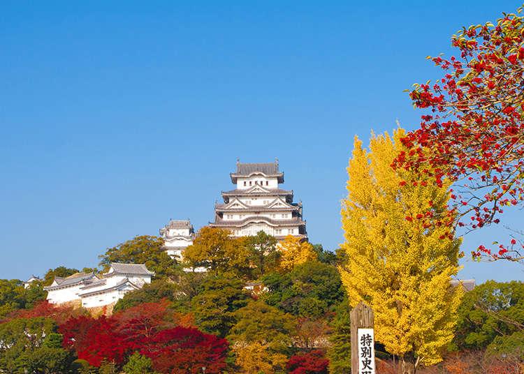 美麗的日本的城堡