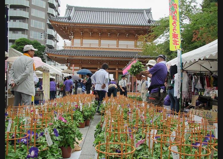 The Bunkyo Asagao Market