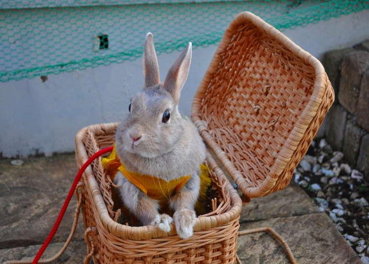 "[MOVIE] A Visit to Bunny Theme Park ""HUTCH"" in Asakusa"