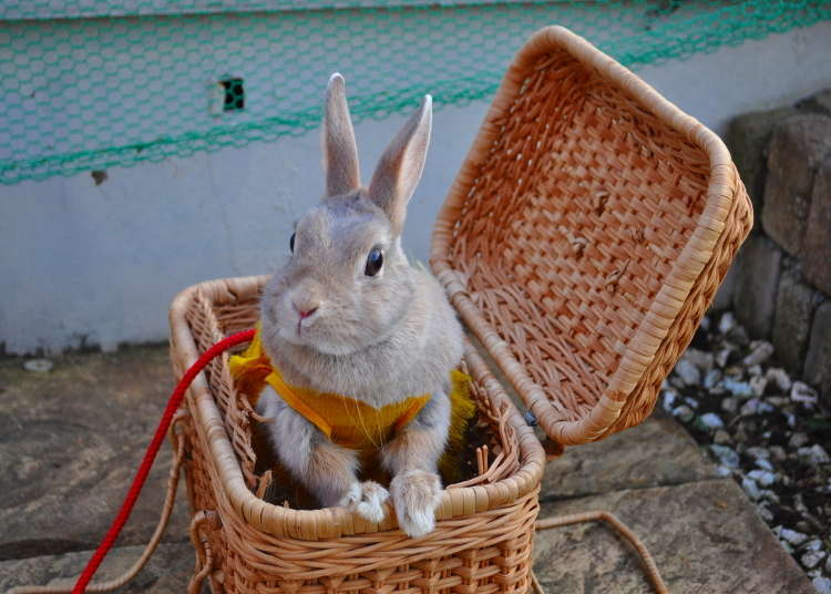 [VIDEO] Ada Taman Bermain untuk Bermain Bersama Kelinci di Asakusa!
