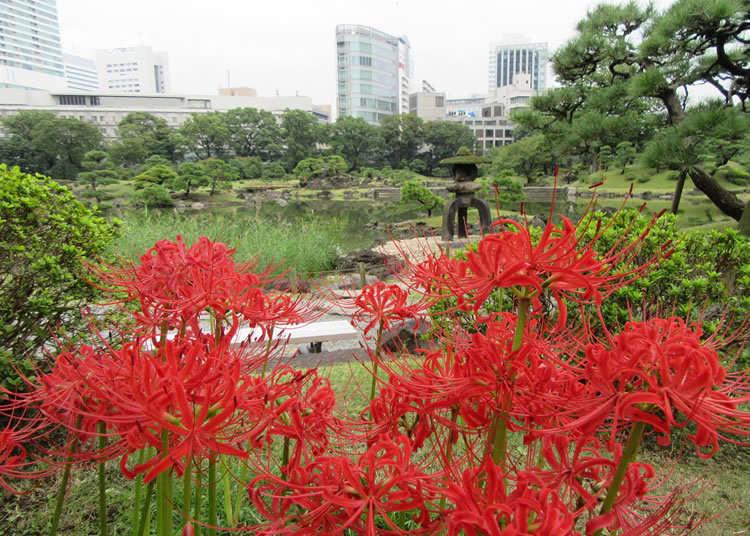 在回游式庭园上色的曼珠沙华