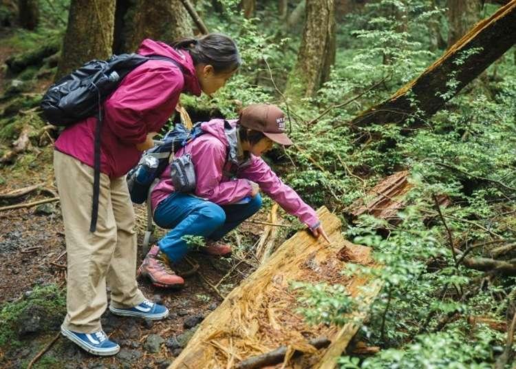 穿過青木原樹海的自然步道