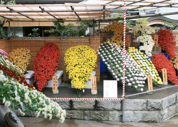 분쿄 국화축제