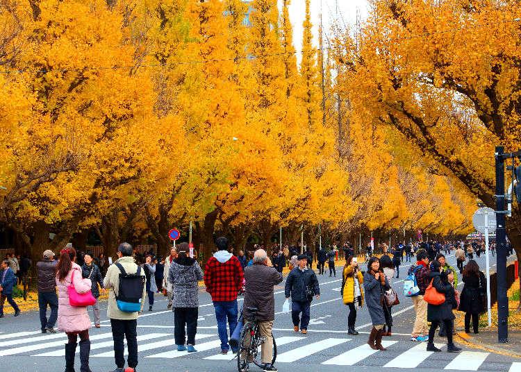 精選7處東京&近郊的紅葉景點
