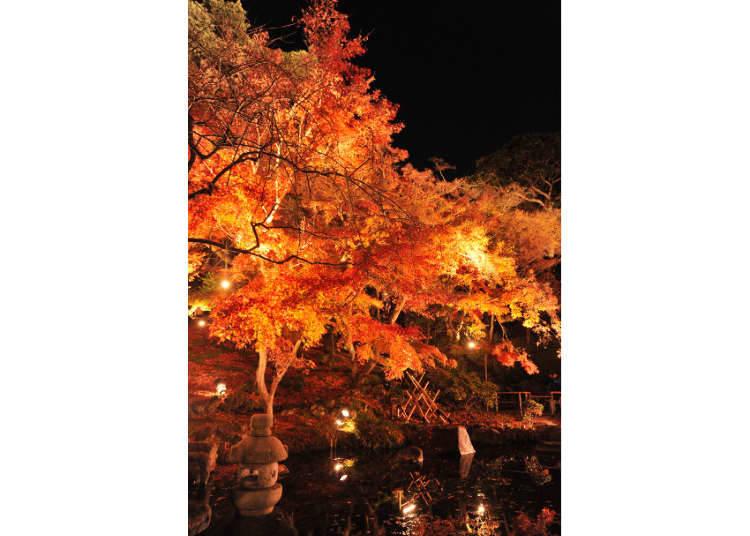 紅葉季節必去的古剎巡訪