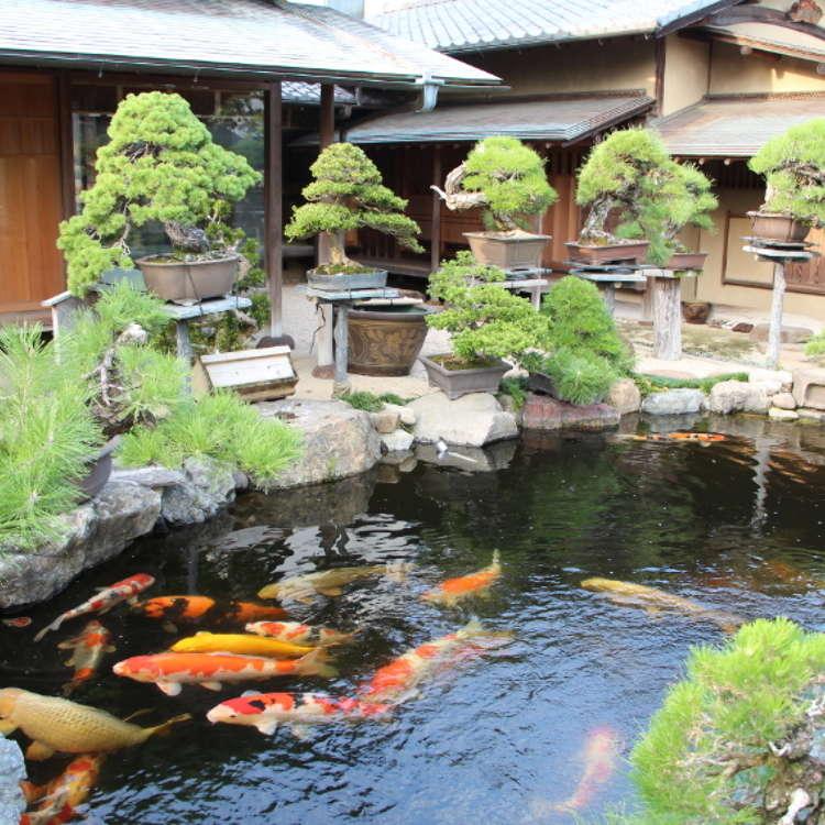 [MOVIE] Character, Harmony, and Elegance: The Art of Bonsai