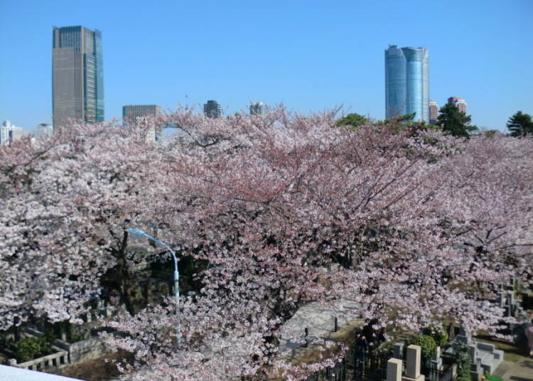 Cherry Trees and Tombstones