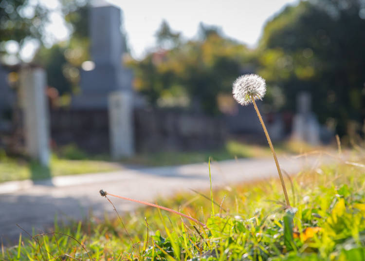 Aoyama Cemetery: An Unexpected Walk Through History