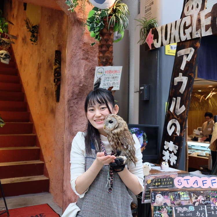 淺草也有狂野的一面?!喜歡貓頭鷹的你,一起去貓頭鷹咖啡廳「Forest Of Owl」吧!