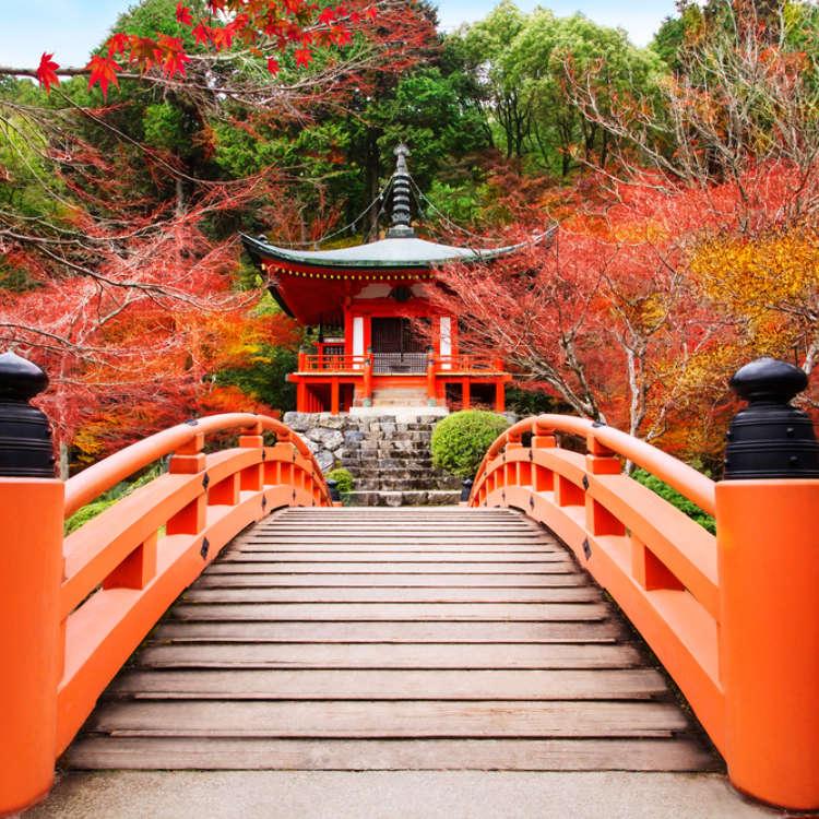 秋游东京赏红叶