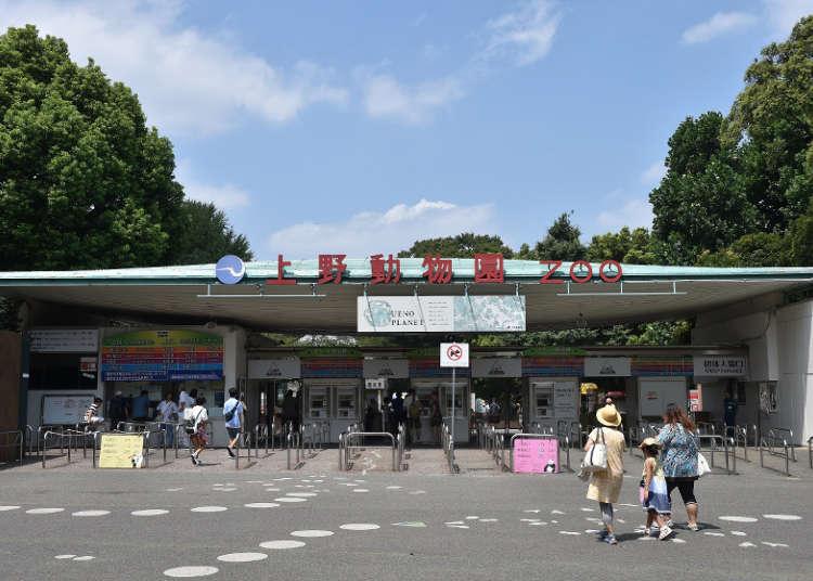 Ueno Zoo: Visit Tokyo's Oldest Zoo