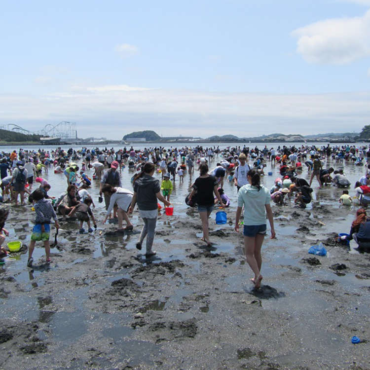 Free Fun in the Sun - Tokyo's Best Clamming and Shellfish Hunting Spots
