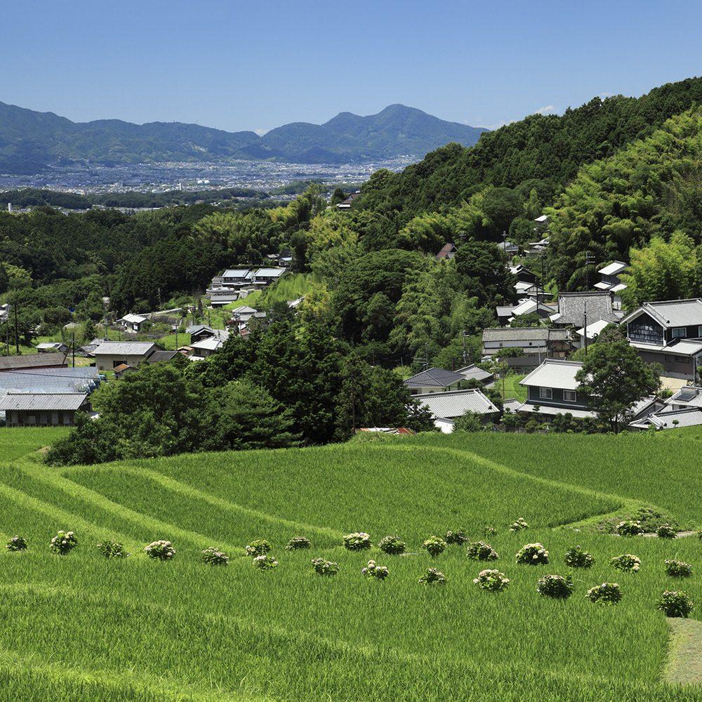 農村,鄉下