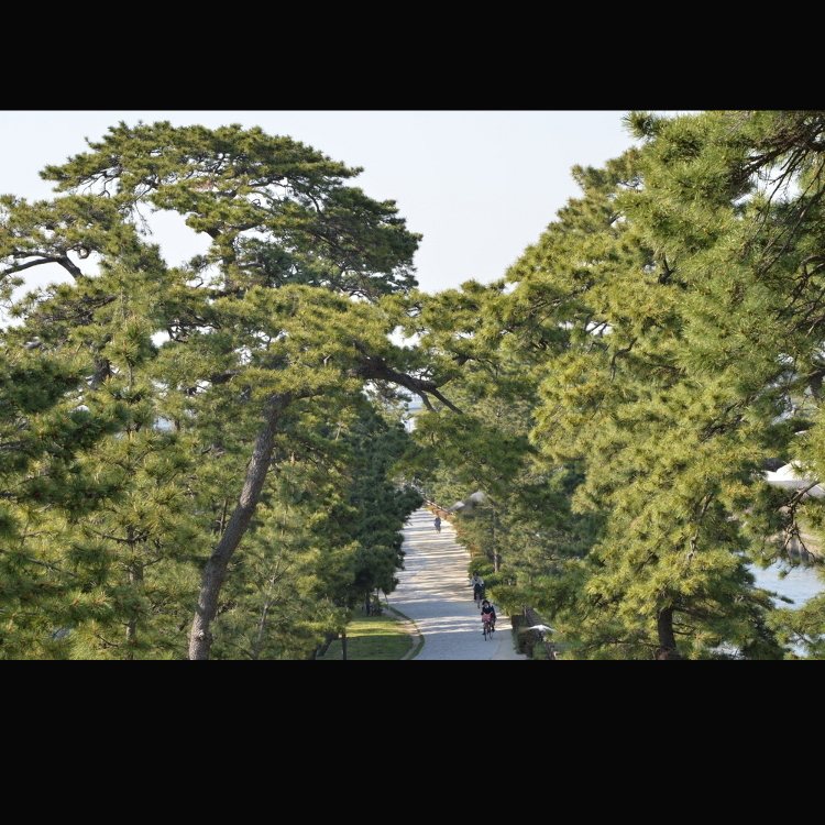 National Site of Scenic Beauty—Scenery of the Narrow Road to the Deep North at Soka Matsubara (Big Bonsai Road)