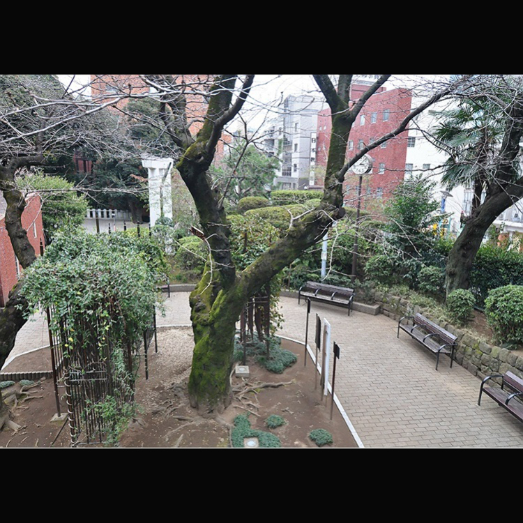 Nogi park